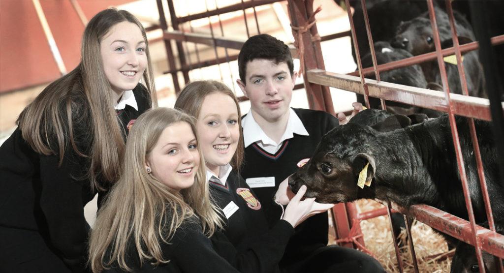 five-schools-selected-to-rear-calves-kepak-news